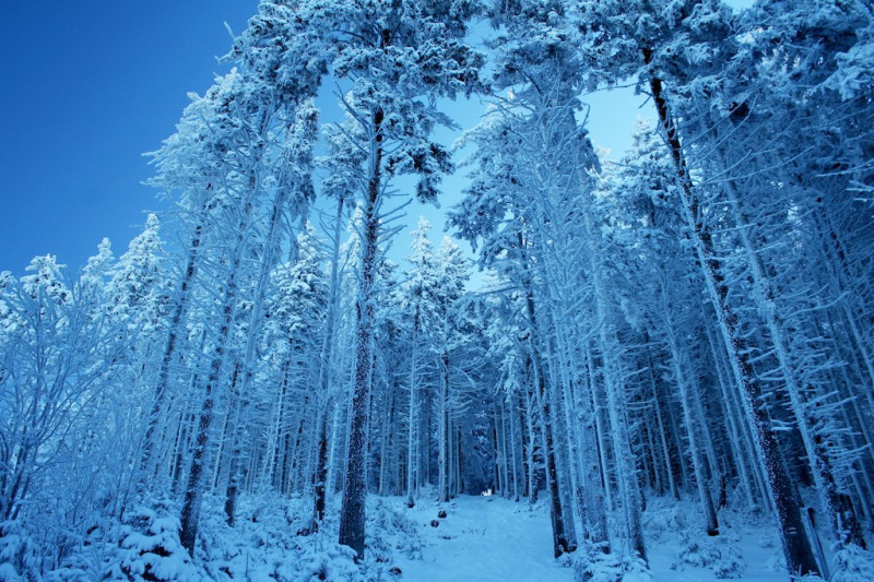 Zasněžený les s modrou oblohou v Beskydech
